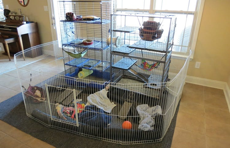 ideas for weasel enclosure