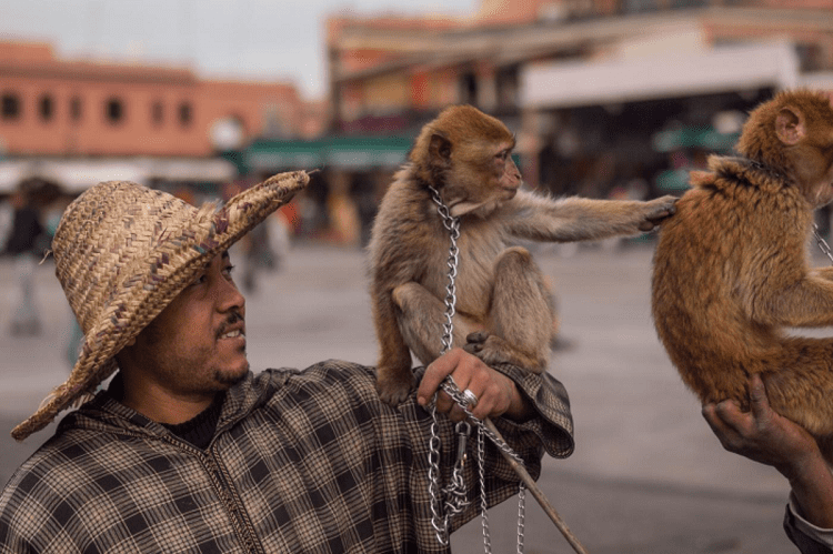 Man Holding Monkey On Leash