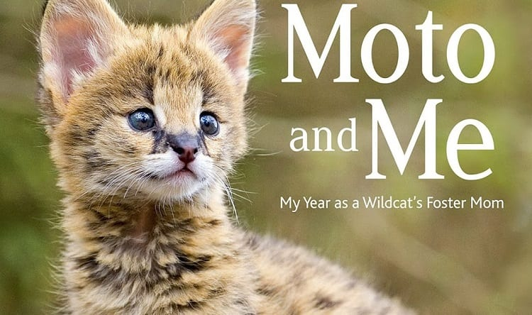Moto And Me: My Year As A Wildcat's Foster Mom by Suzi Eszterhas