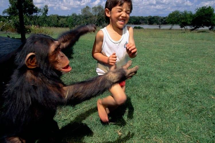 hugging chimp