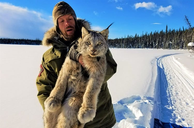 Man Carrying Lynx