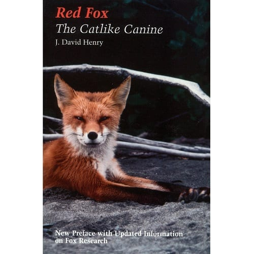 Red Fox: The Catlike Canine