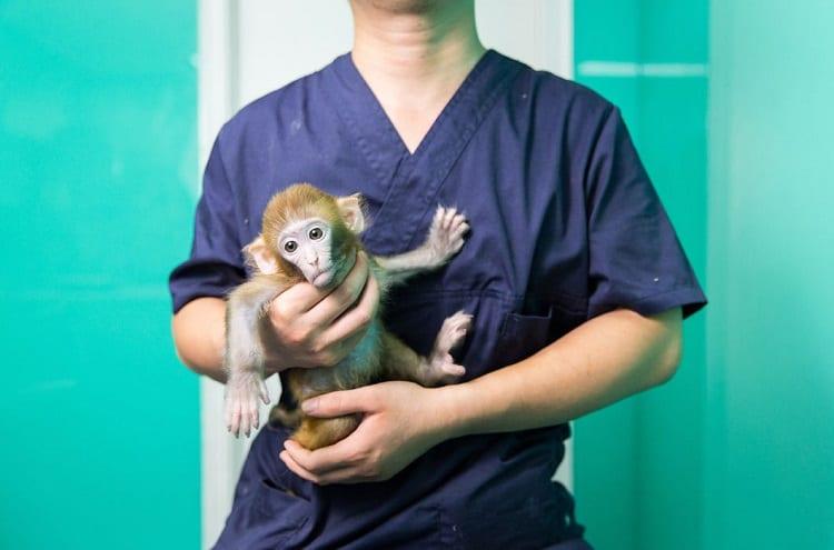 Holding Monkey