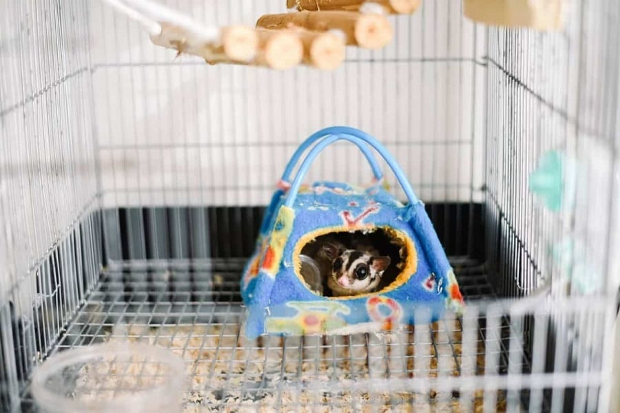 Build A Perfect Habitat For Your Sugar Glider