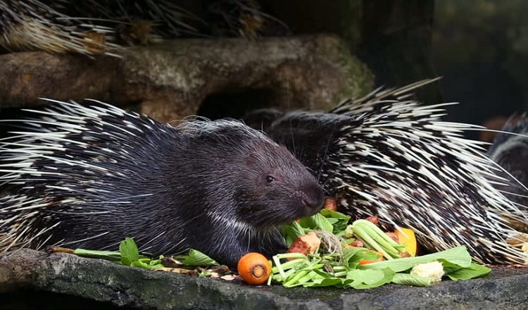 What Kind Of Food Do Exotic Pets Need To Eat?