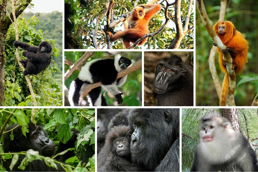 Monkeys Pets