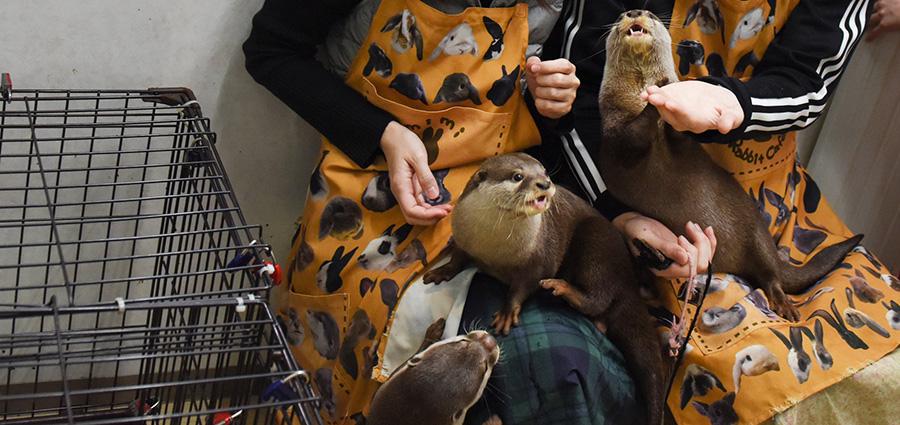 Otter Pets