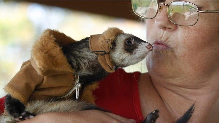 Kissing a Ferret